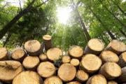 Uso del legno: le nuove normative