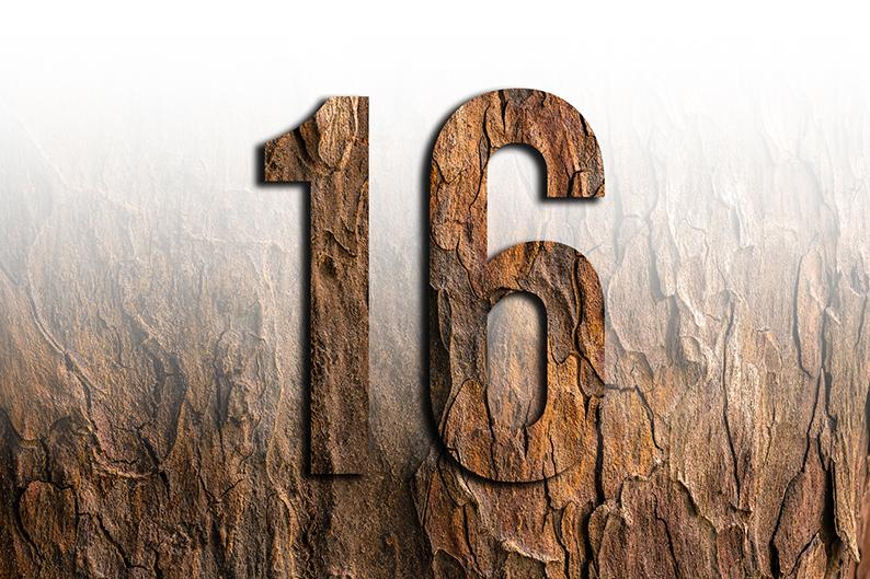 significato del numero 16 sedici