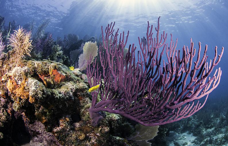 corallo proprietà poteri e caratteristiche