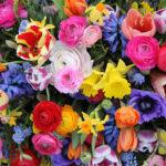fiori da regalare per una laurea