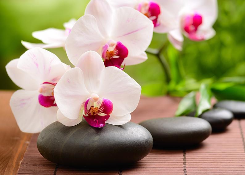 orchidea significato e simbologia