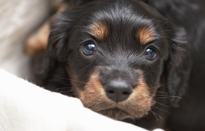 sognare cane significato e simbologia