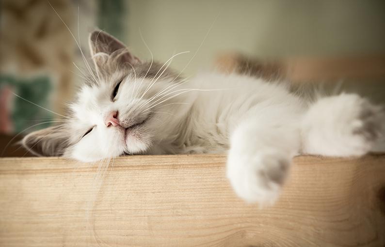 sognare gatto significato e simbologia