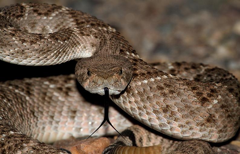 sognare serpente significato e simbologia