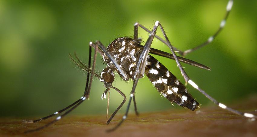 Come difendersi dalle punture delle zanzare in modo naturale
