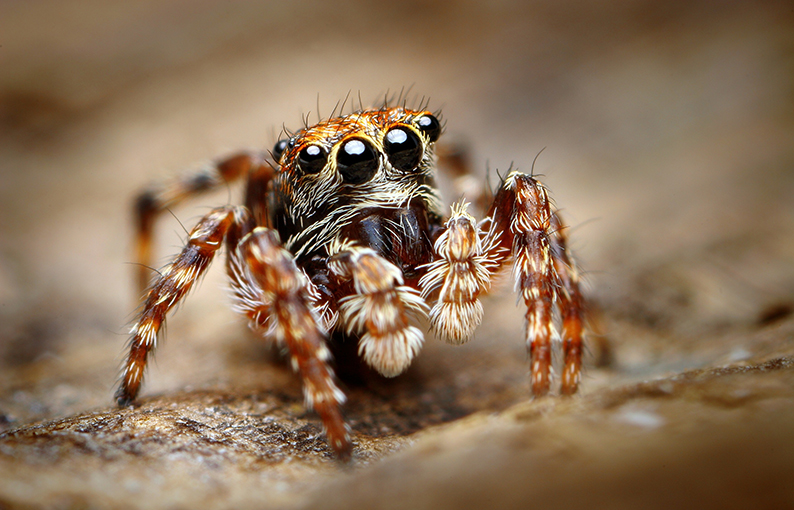 Aracnofobia paura dei ragni