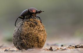 entomofobia paura degli insetti